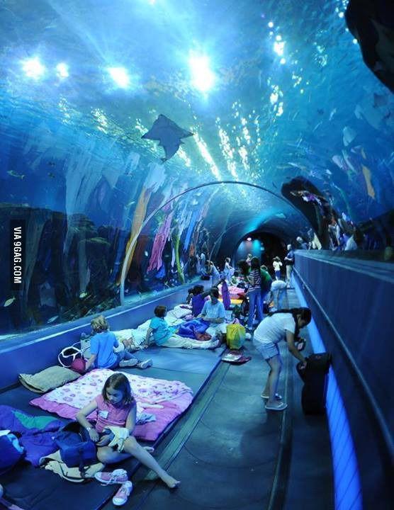 Sleepover with the sharks | Georgia aquarium, Sleepover, Aquarium