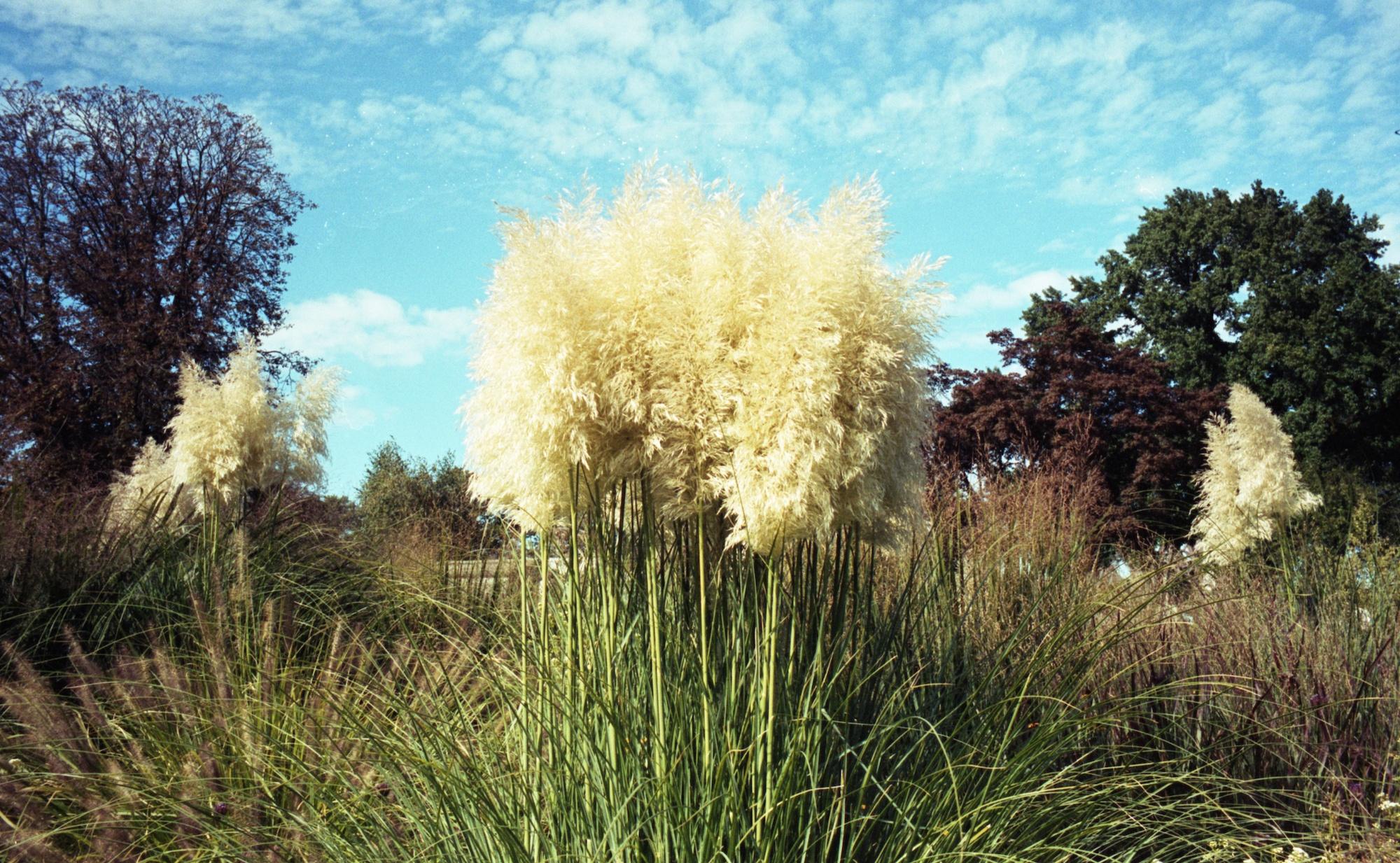 Fluffy Plant.jpg