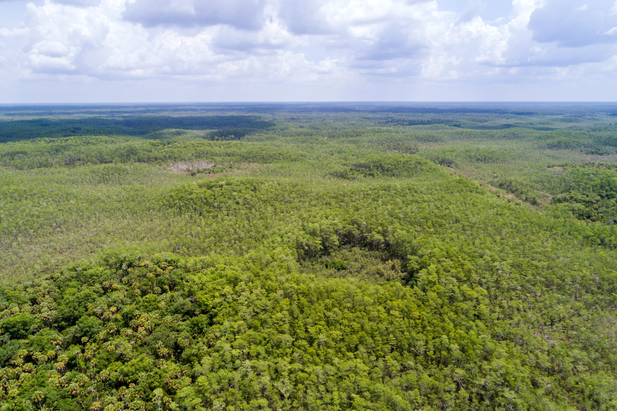 Florida, Naples, Everglades, Big Cypress National Preserve. (Photo by: Jeffrey Greenberg/Education Images/Universal Images Group via Getty Images)